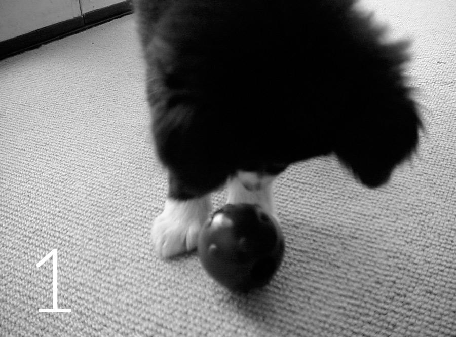 pup-w-tricky-treat-1-bw
