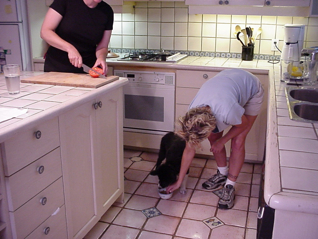 pup in kitchen w: people