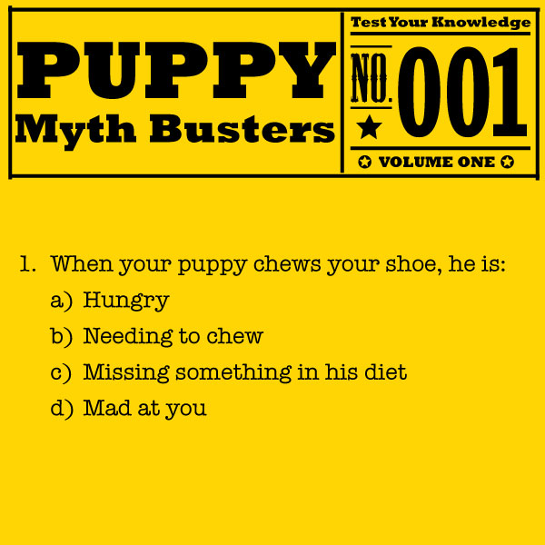 Puppy-Myth-Busters_Questions_01