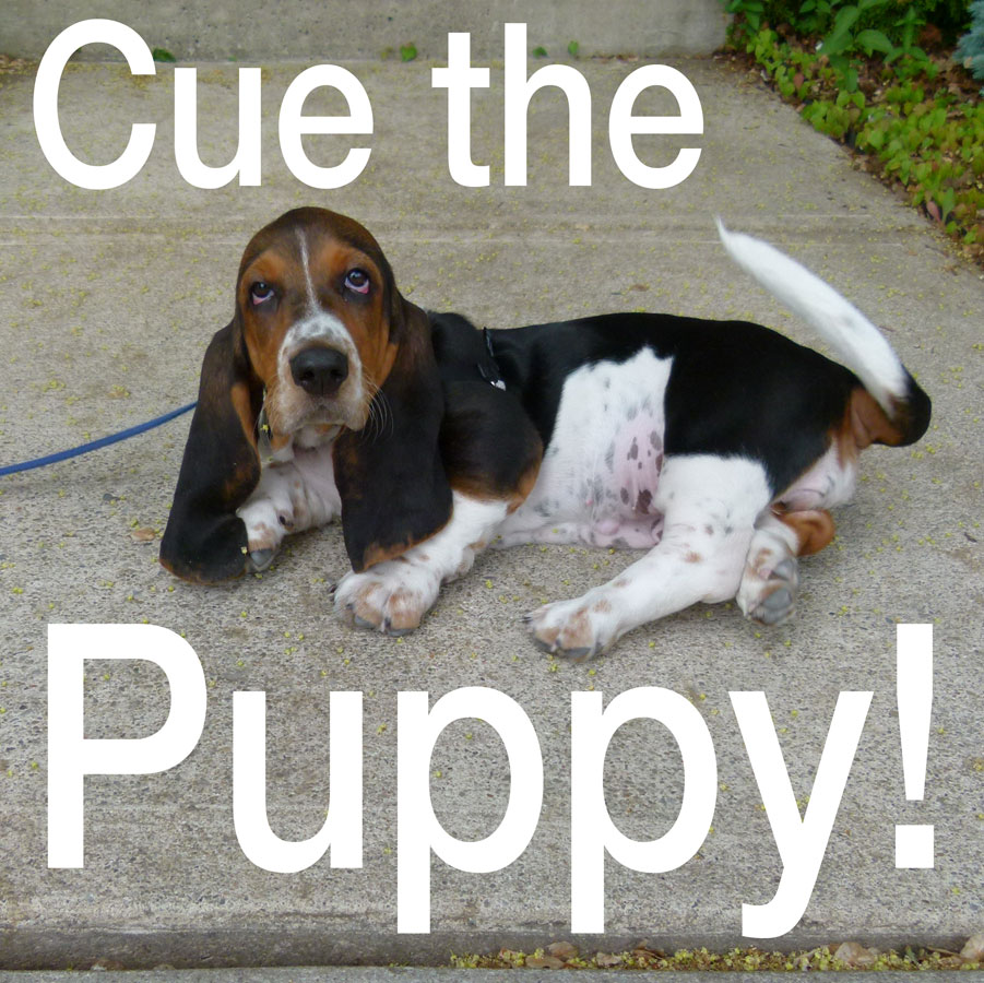 Cue the Puppy! A workable program for you and your puppy.