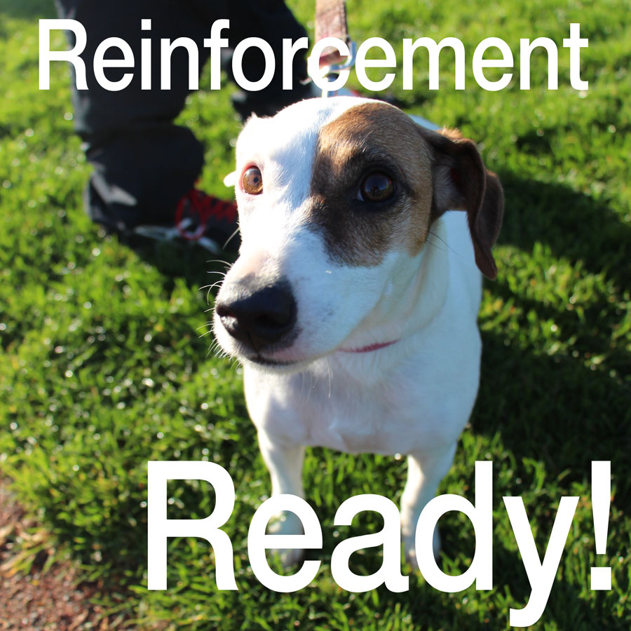 Positive reinforcement training a puppy
