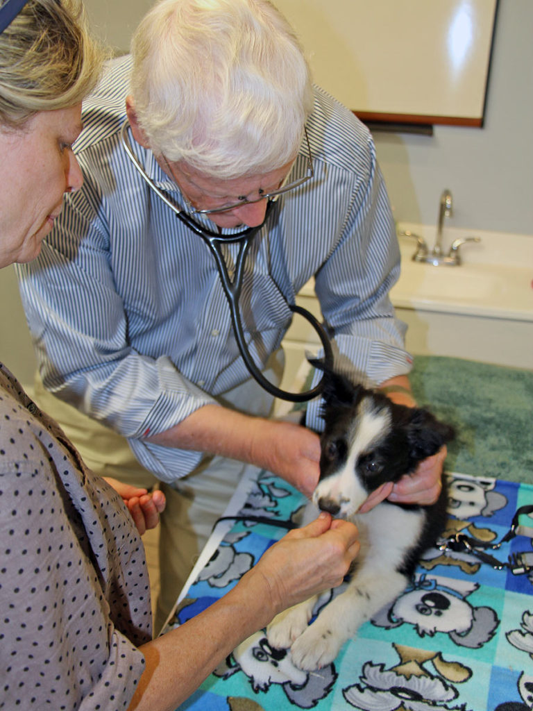 Veterinarian listening to puppy's heartbeat